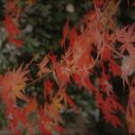秋も・・・